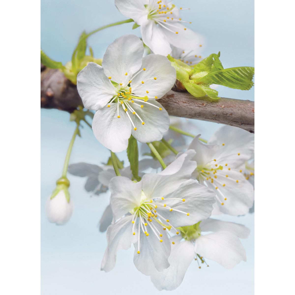 Фотопанно флизелиновое «Blossom» 184х248 см