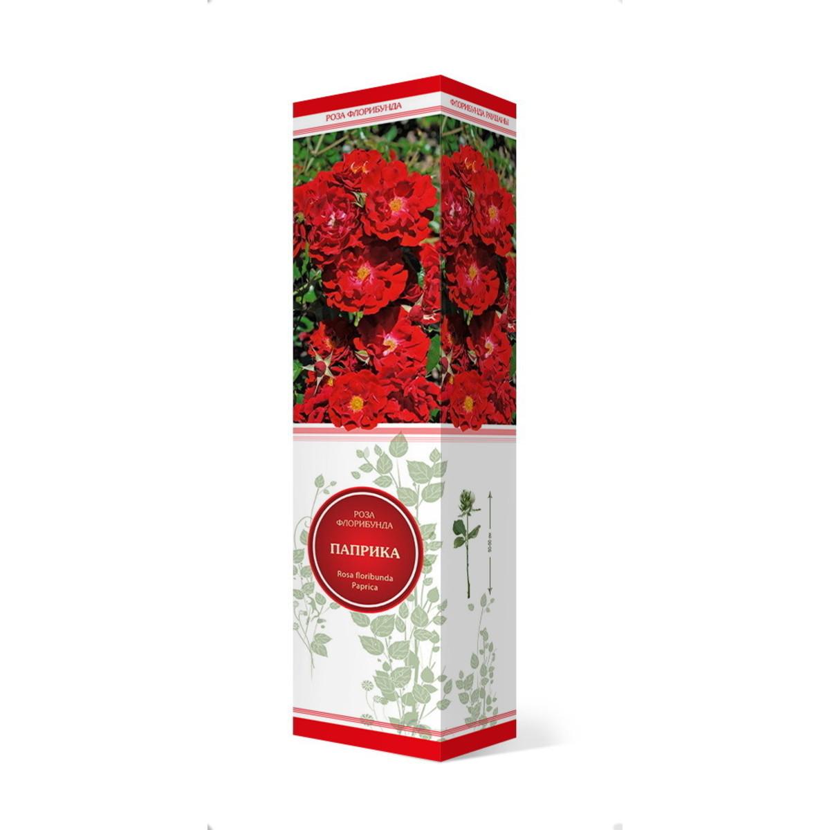 Розы флорибунда Паприка