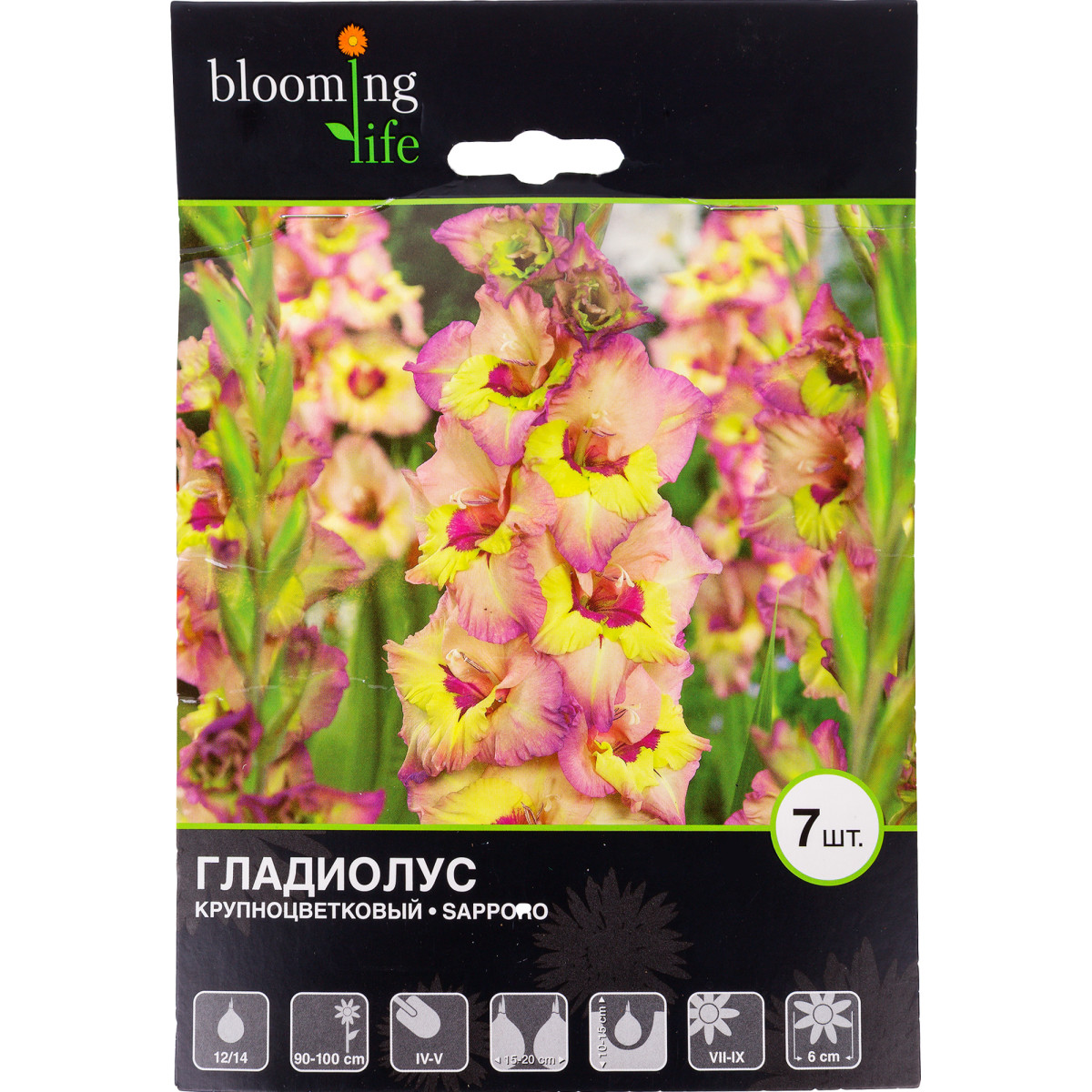 Гладиолус крупноцветковый «Саппоро»
