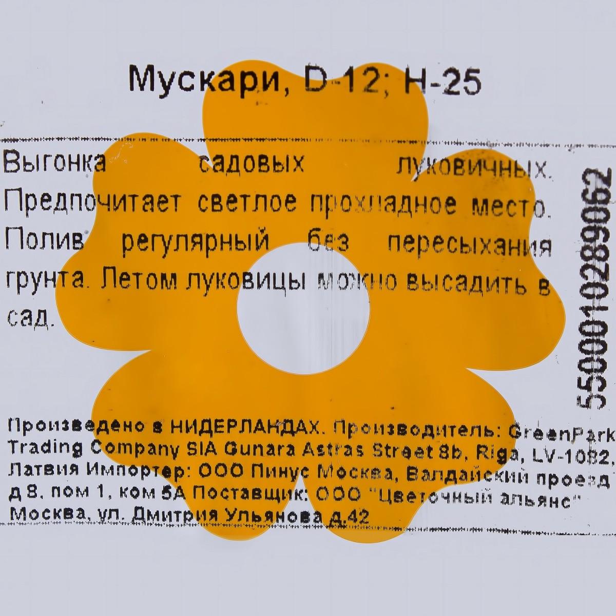 Мускари D12 Композиция