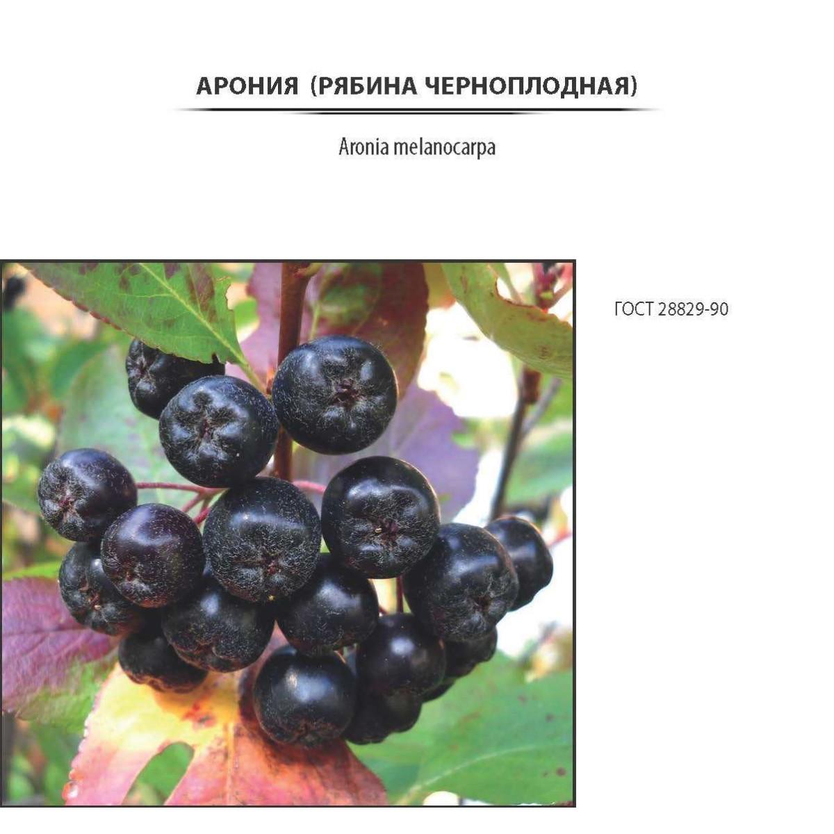 Арония черноплодная контейнер 2-3 л