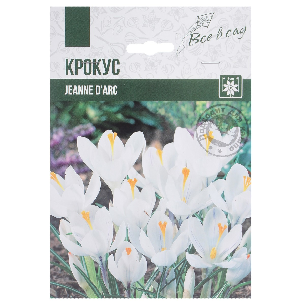 Крокус Крупноцветковый Жанна Д Арк