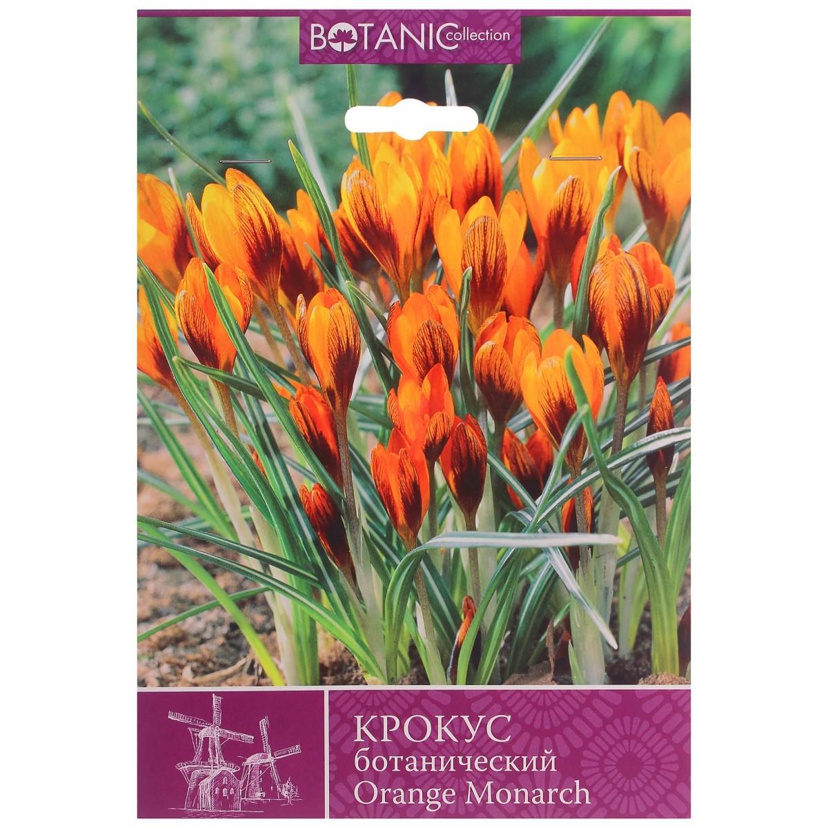Крокус Ботанический Оранж Монарх