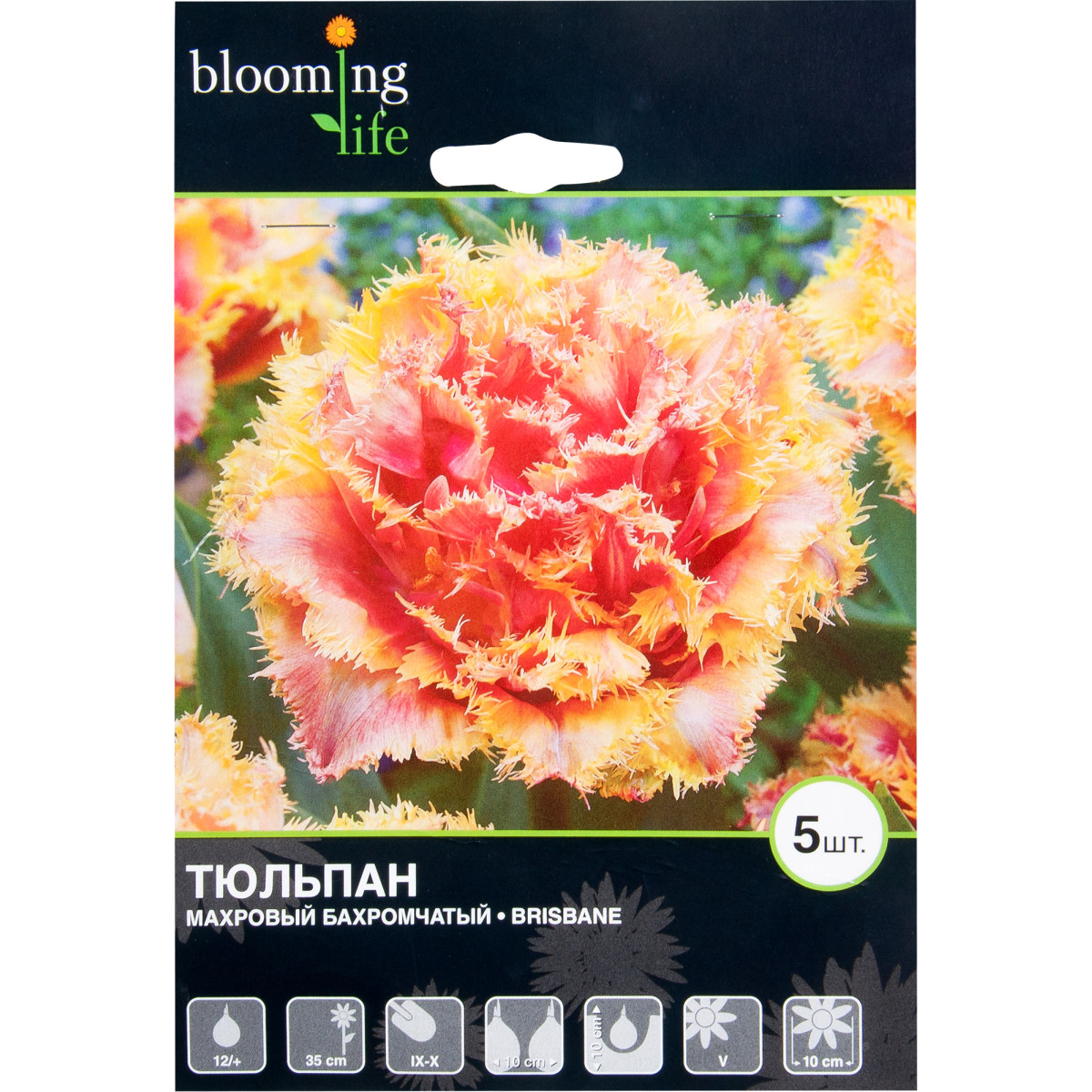 Тюльпан махровый бахромчатый Брисбан
