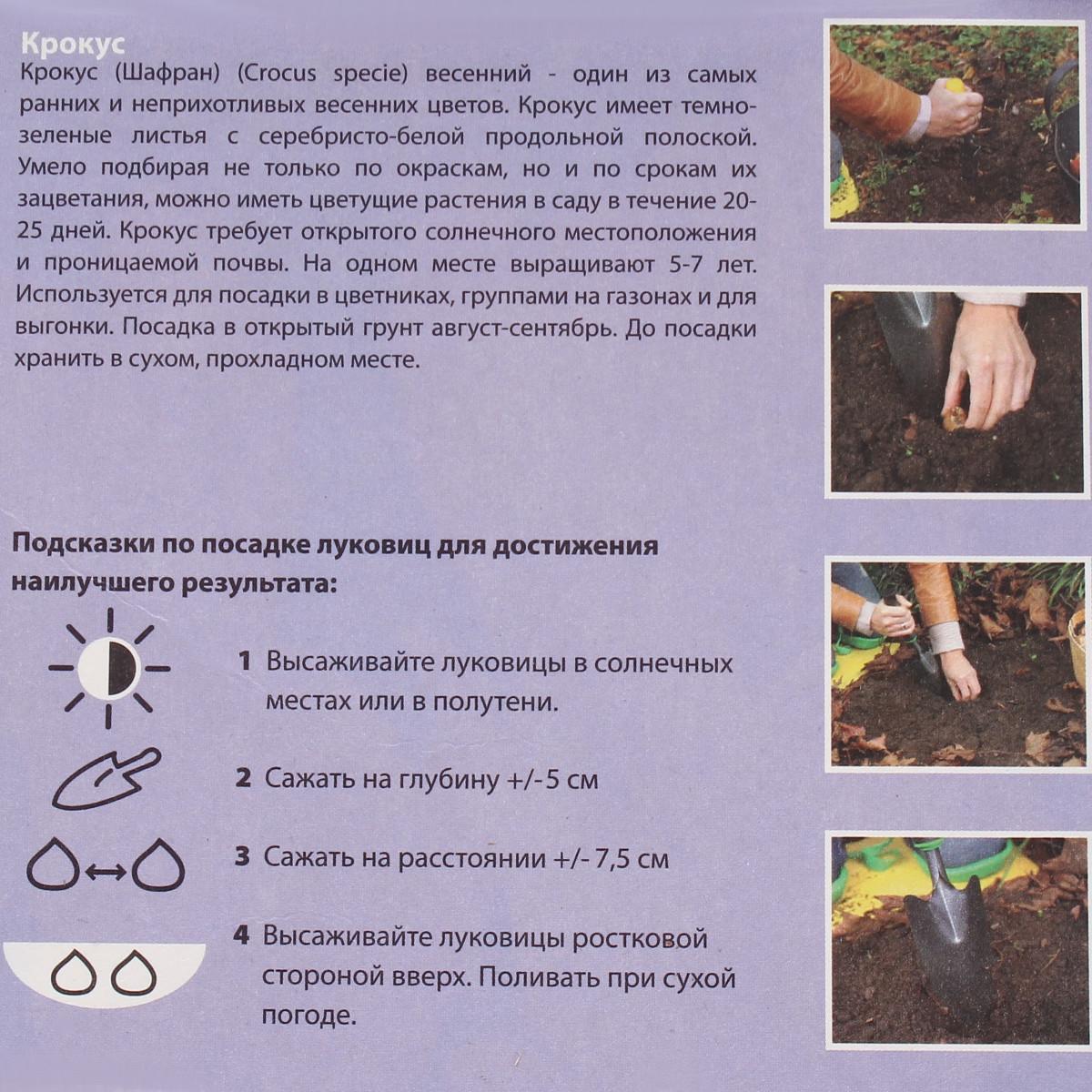 Крокус Йеллоу Размер Луковицы 7/8