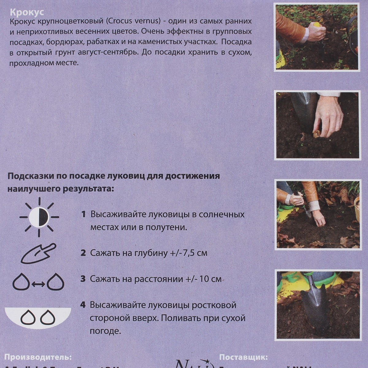 Крокус Крокус Кочи Размер Луковицы 9/10