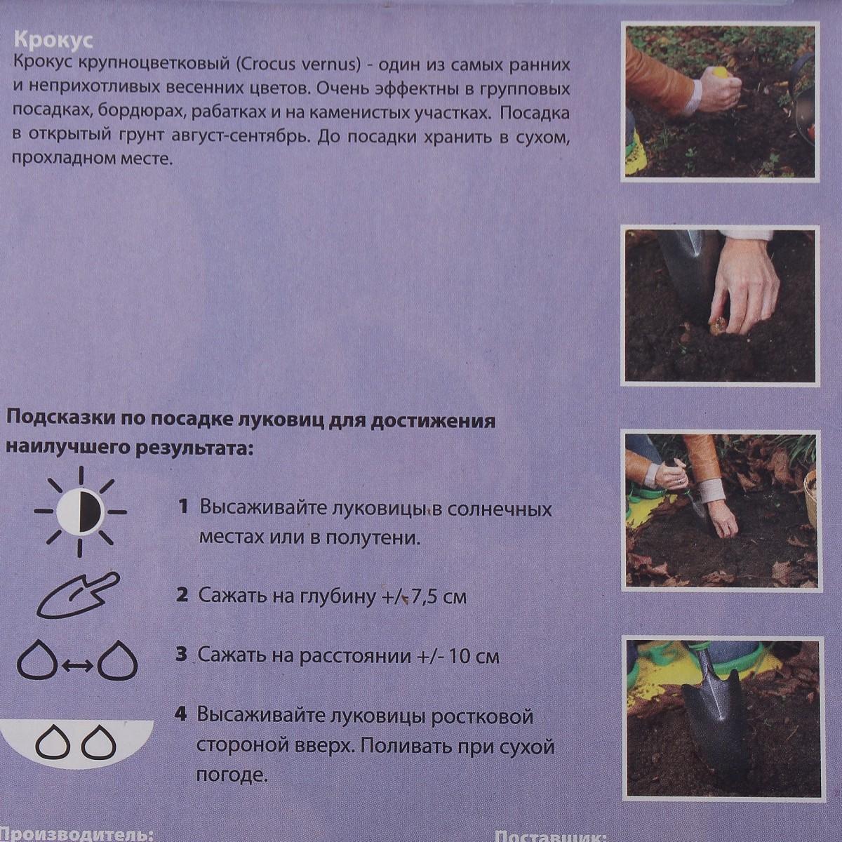 Крокус Страйпд Бьюти Размер Луковицы 7/8