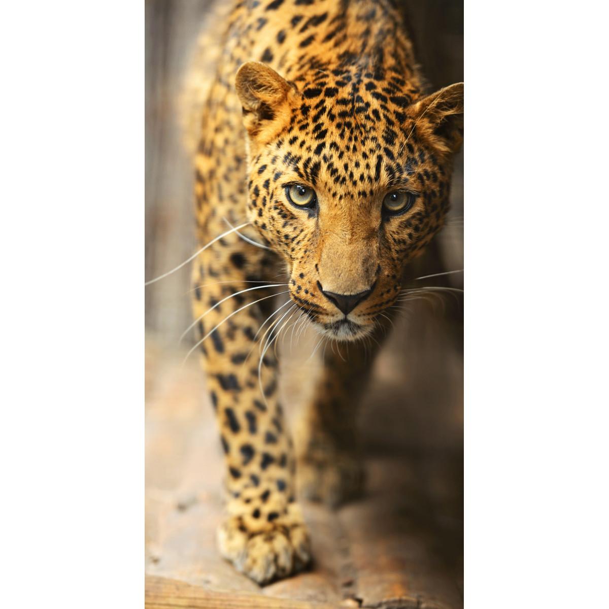 Фотообои «Леопард» флизелиновые 130x250 см E515030
