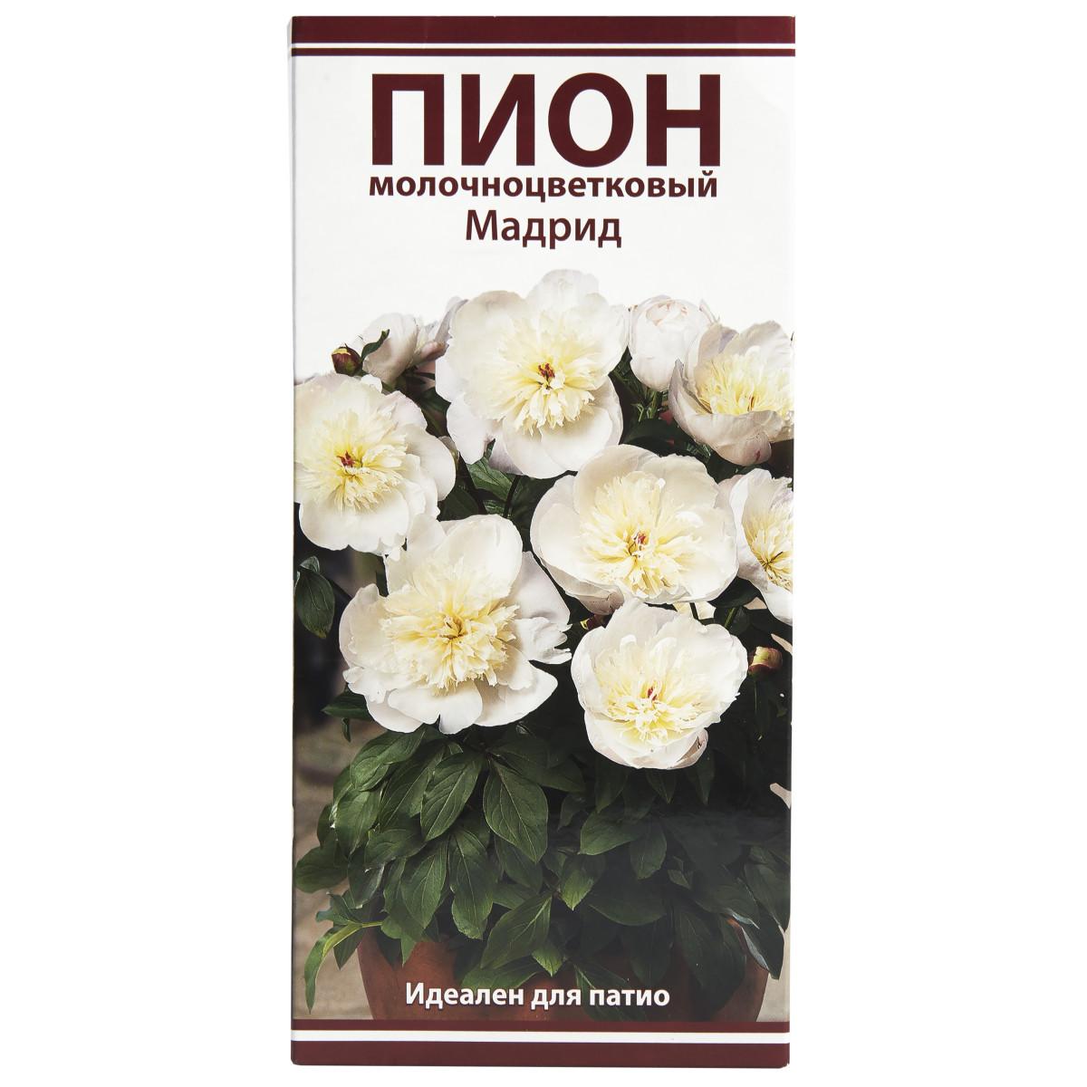 оренбург магазин чиполлино корневища семена пионов купить