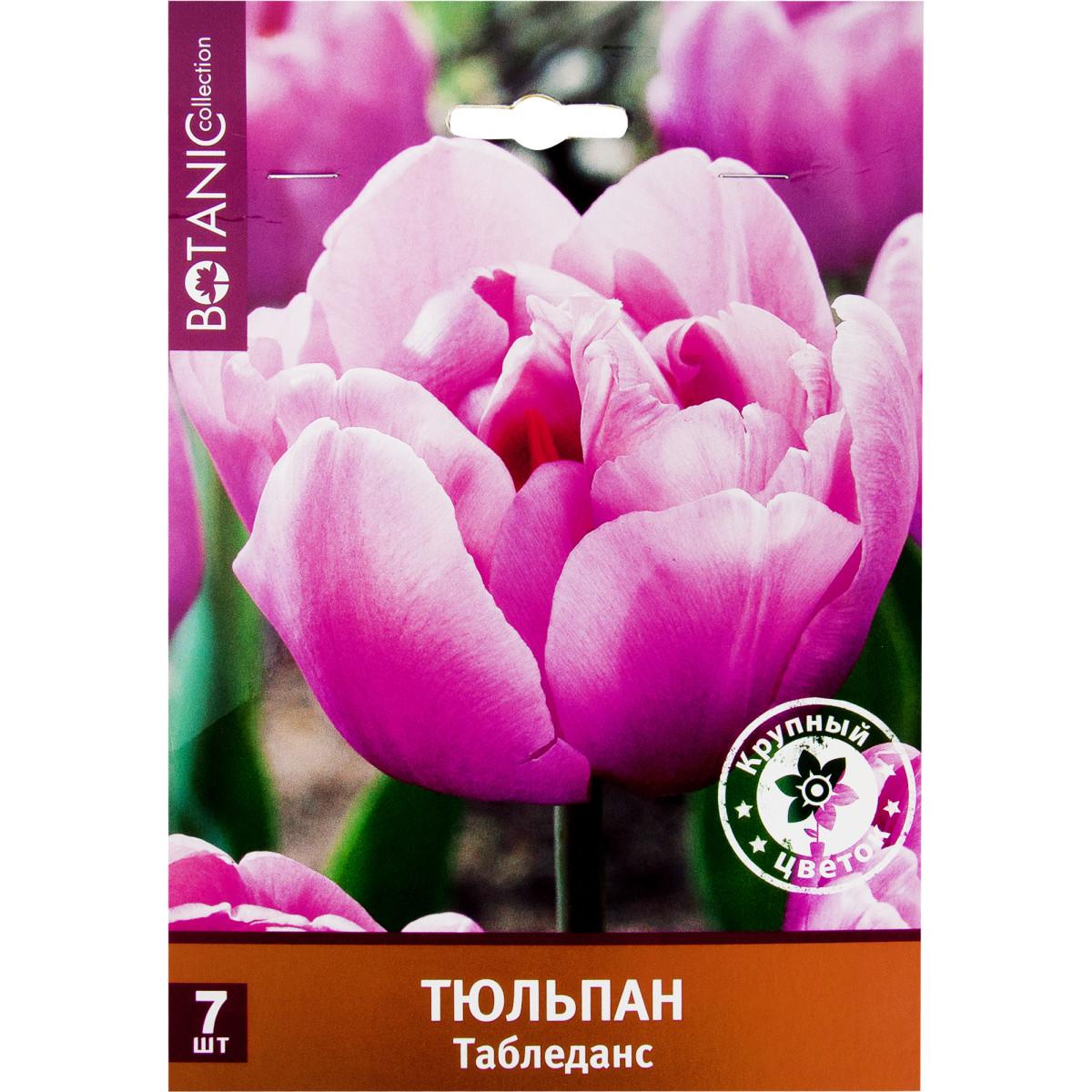 Тюльпан махровый поздний Табледанс