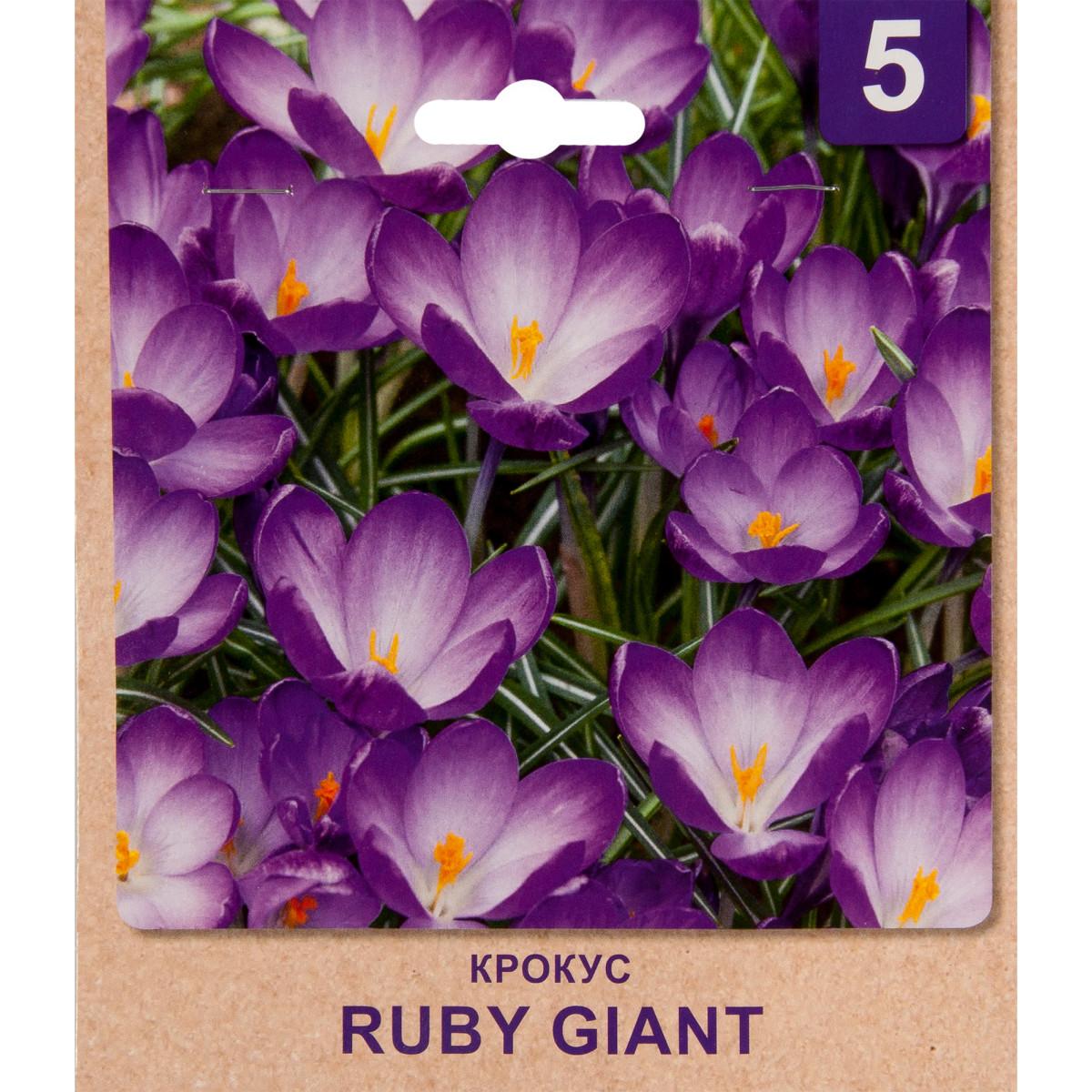 Крокус Ruby Giant Размер Луковицы 5/7 5