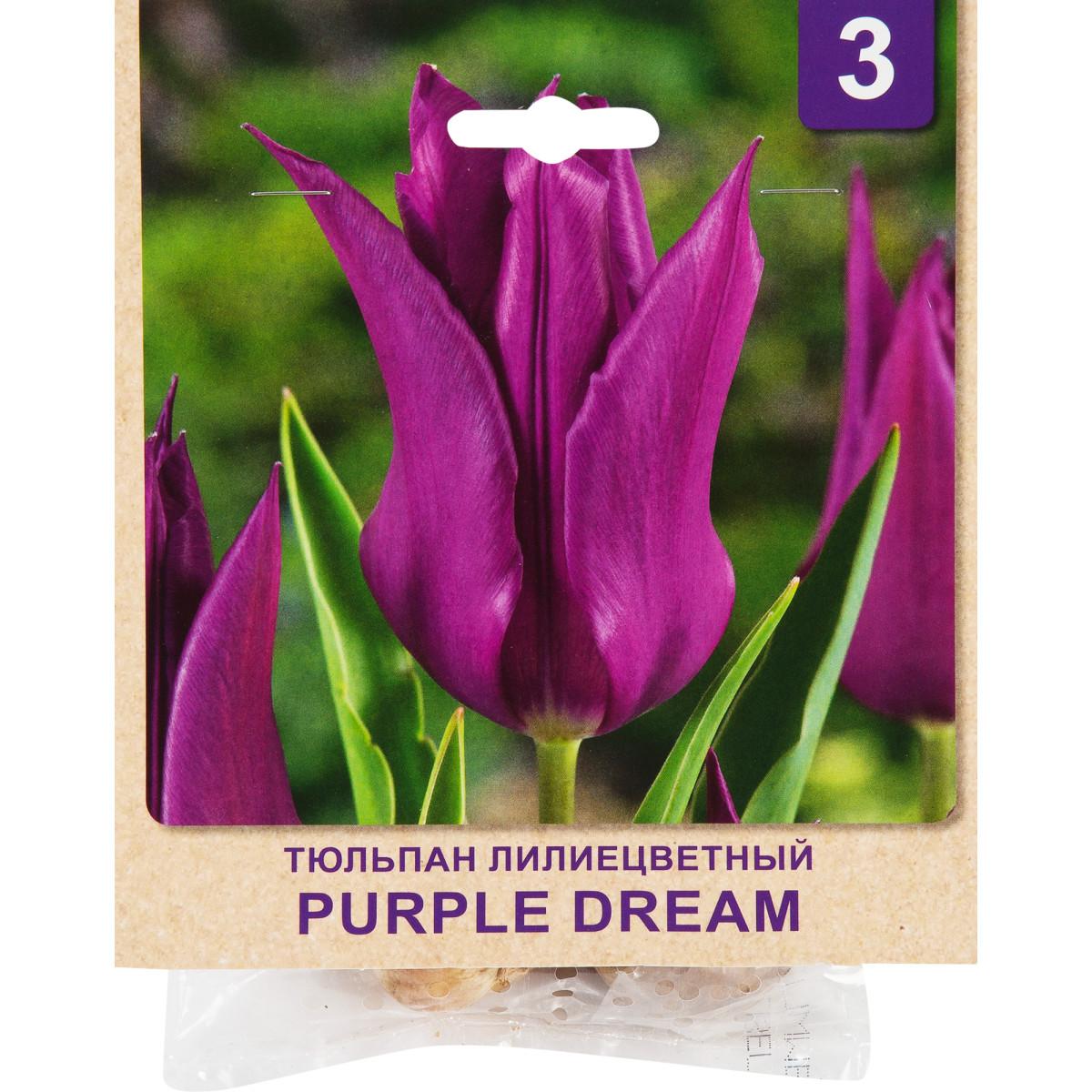 Тюльпан Purple Dream размер луковицы 10/11 3 шт.