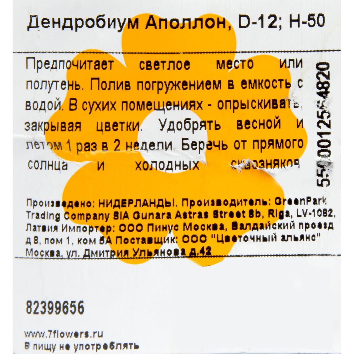 Дендробиум Аполлон 12x50