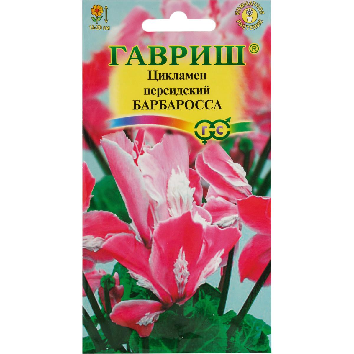 Цикламен персидский «Барбаросса» 3 шт.