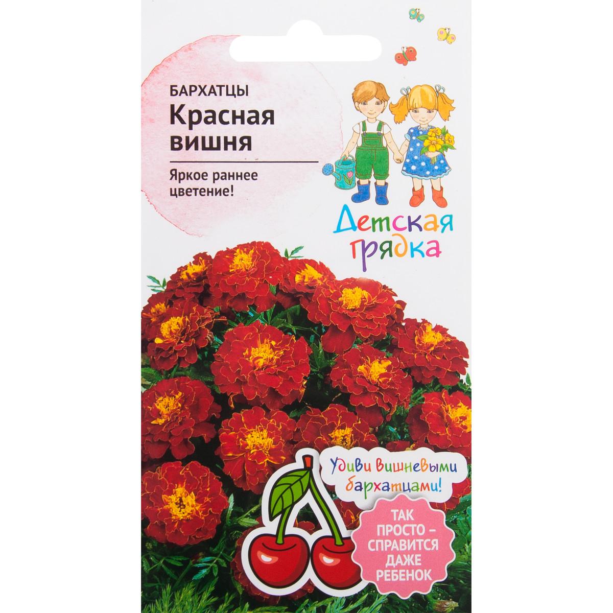Бархатцы «Красная вишня» 10 шт.