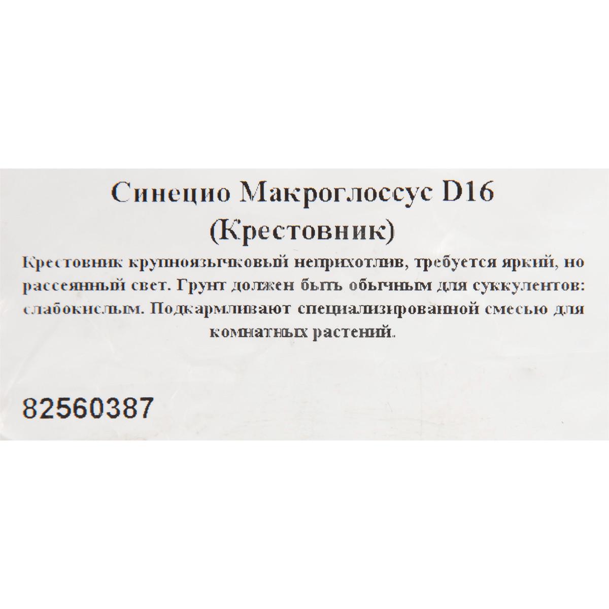 Крестовник Крупноязычковый D16 H25
