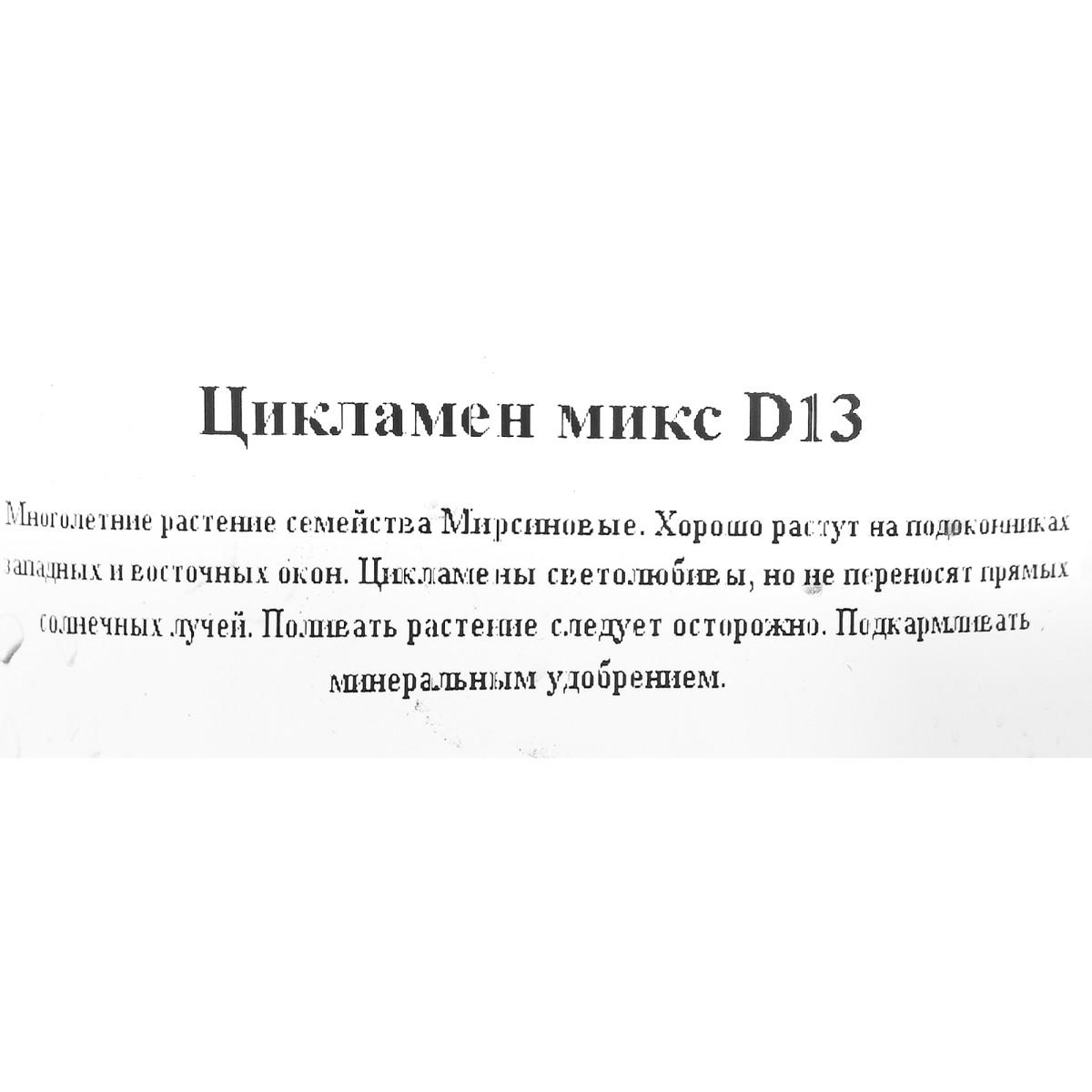Цикламен Микс D12