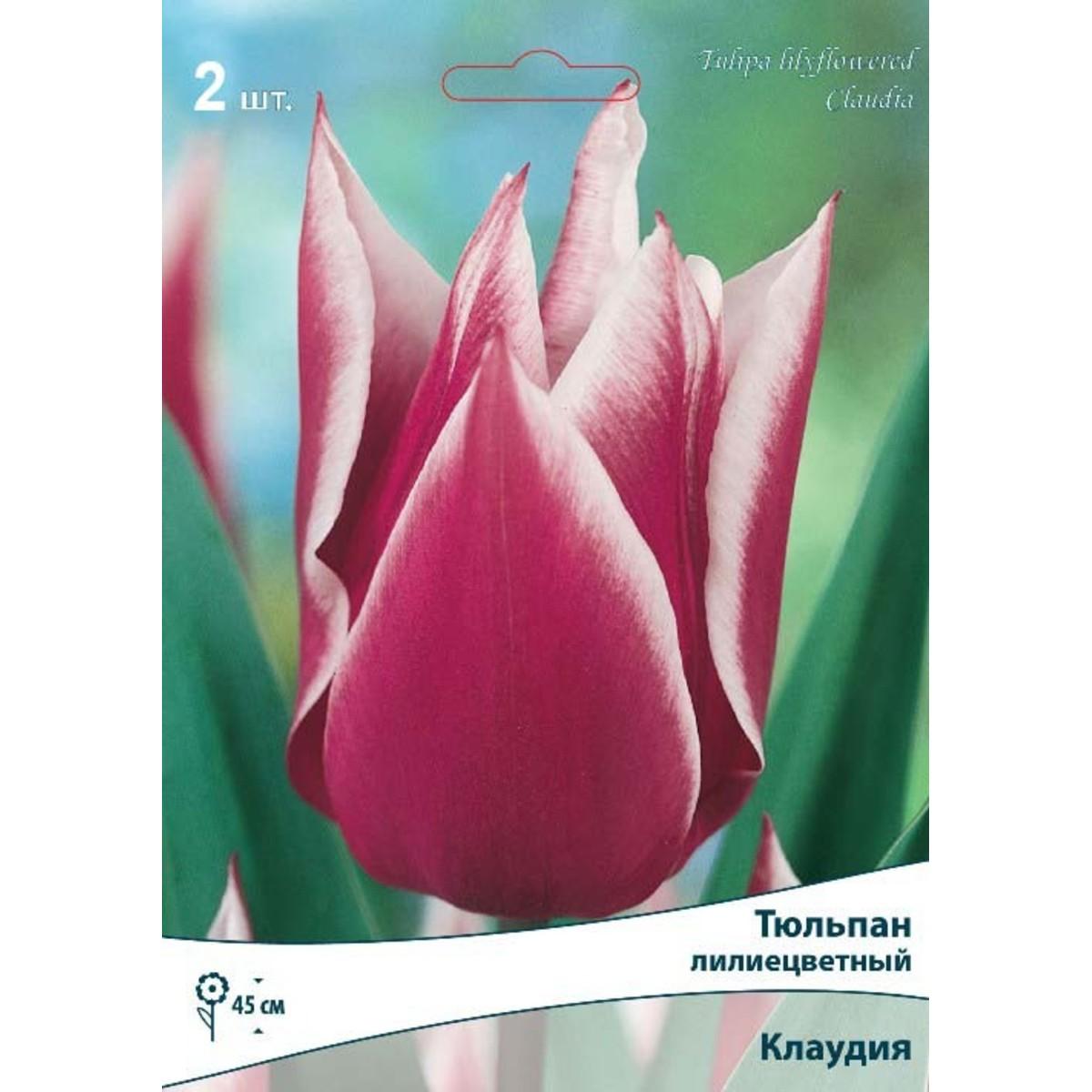 Тюльпан лилиецветный Клаудия размер луковицы 10/11 2 шт.