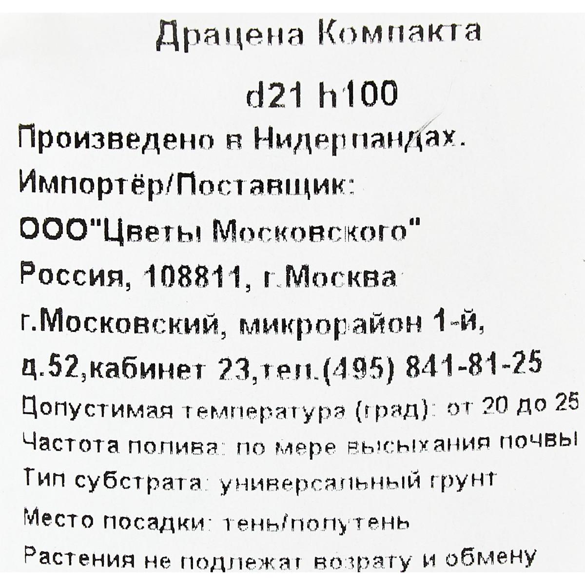 Драцена Компакта 21x100