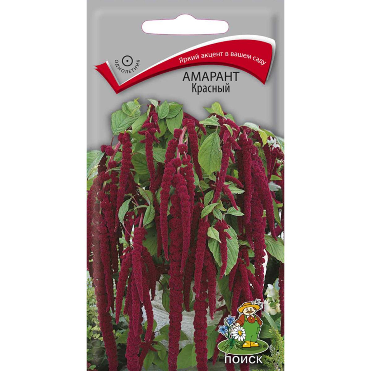 Семена Амарант Красный