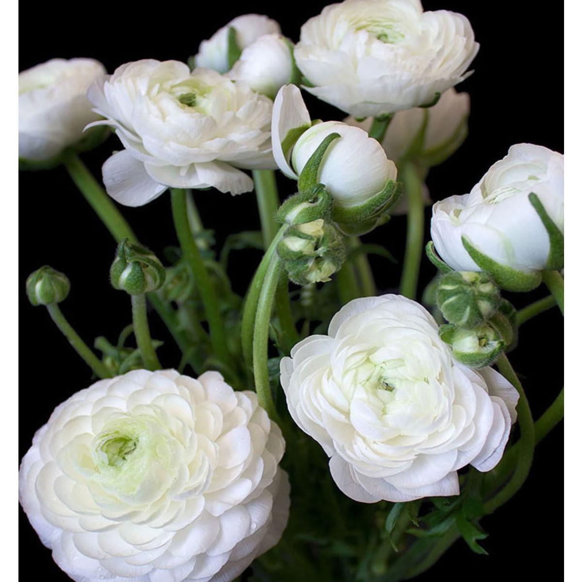 Фотообои For Wall Цветы 11856V4 254х184 см