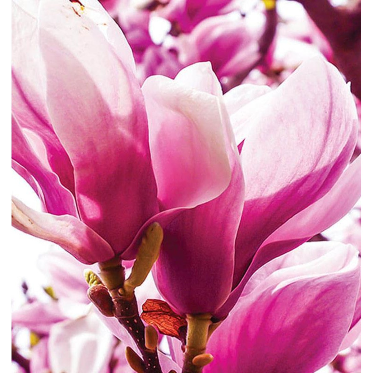 Фотообои For Wall Цветы 1341P8 368х254 см