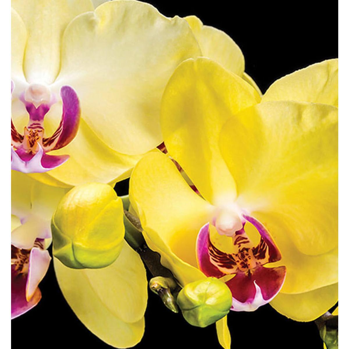 Фотообои For Wall Цветы 1343P8 368х254 см