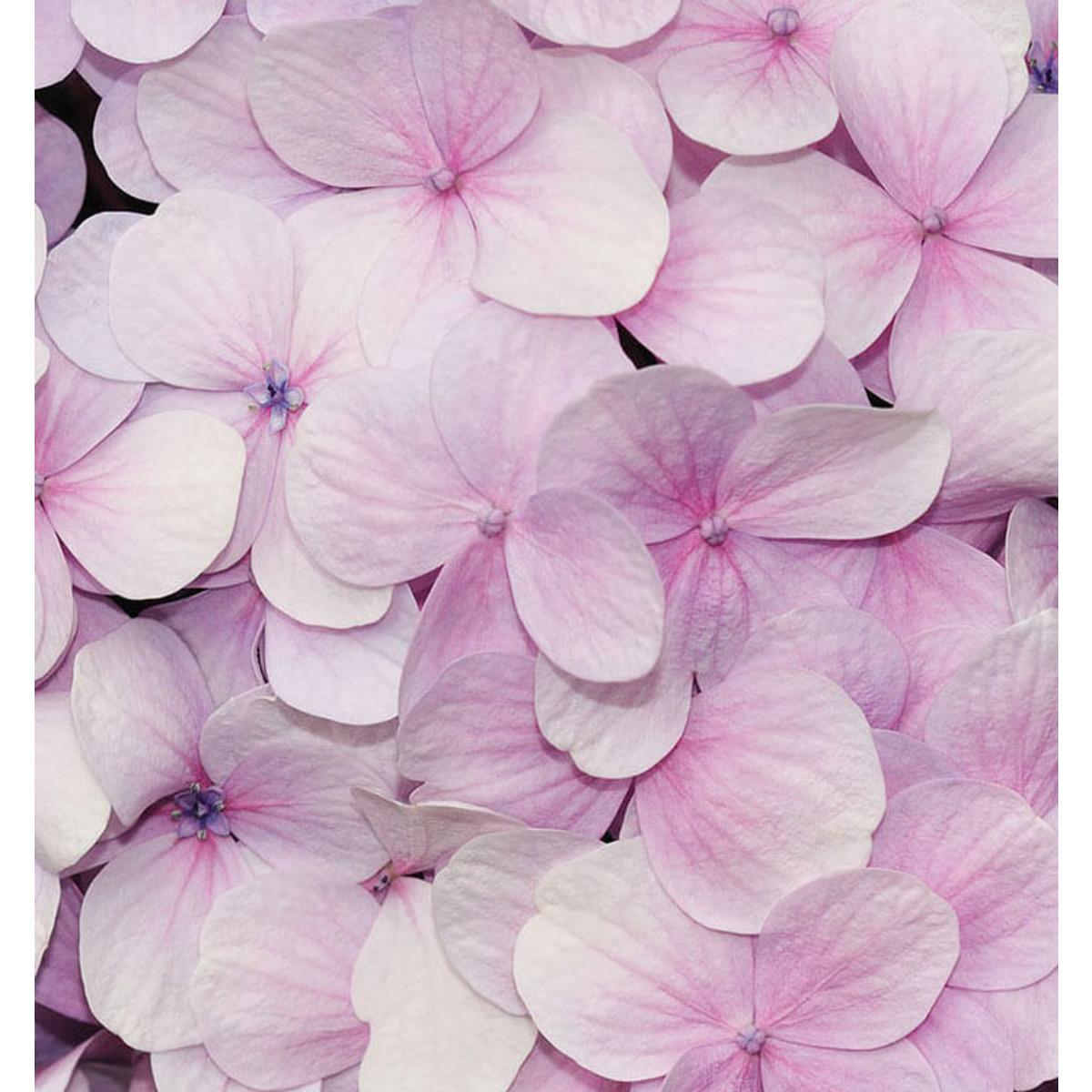 Фотообои For Wall Цветы 3103P8 368х254 см