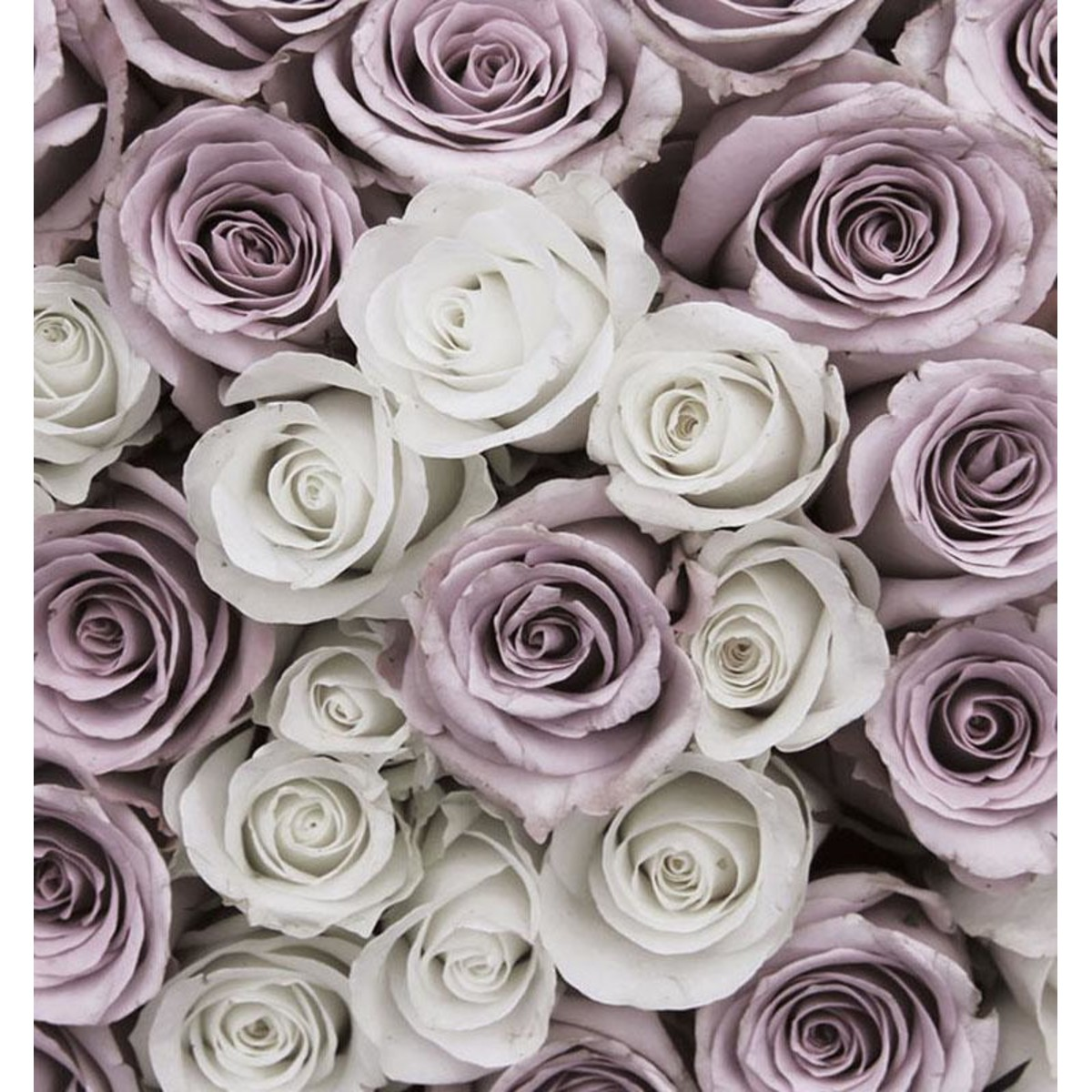Фотообои For Wall Цветы 1627V4 254х184 см