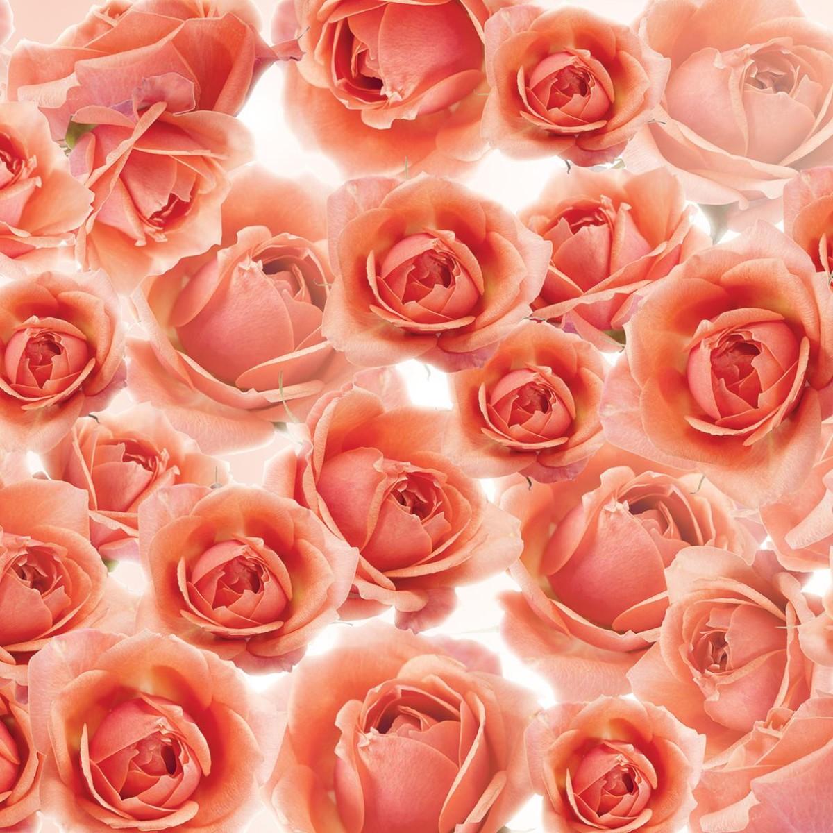Фотообои For Wall Цветы 3321P4 254х184 см