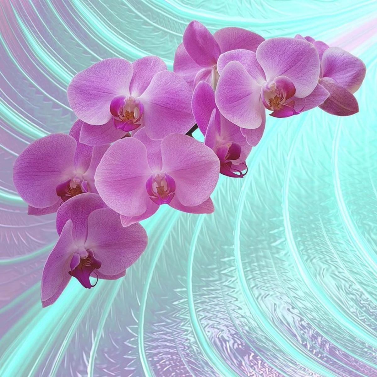Фотообои Московская Обойная Фабрика Розовая орхидея 6155-М 200х200 см