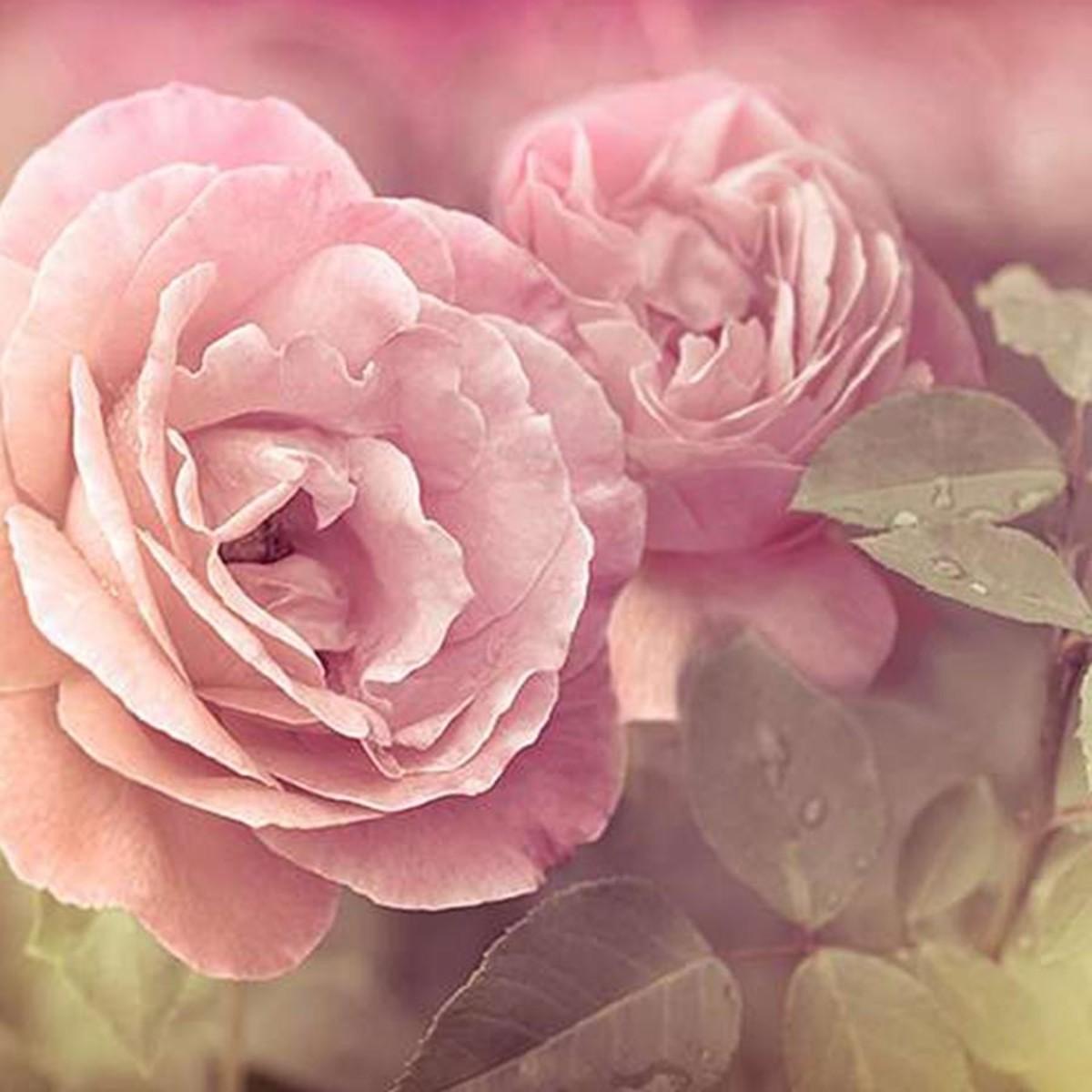 Фотообои Divino Decor Розы A-079 300х270 см