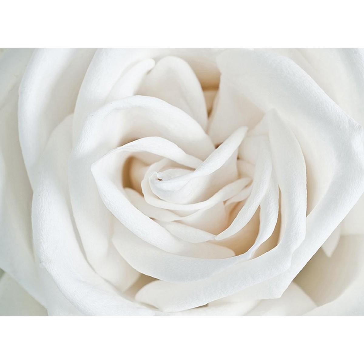 Фотообои Divino Decor Роза белая A-061 200х147 см