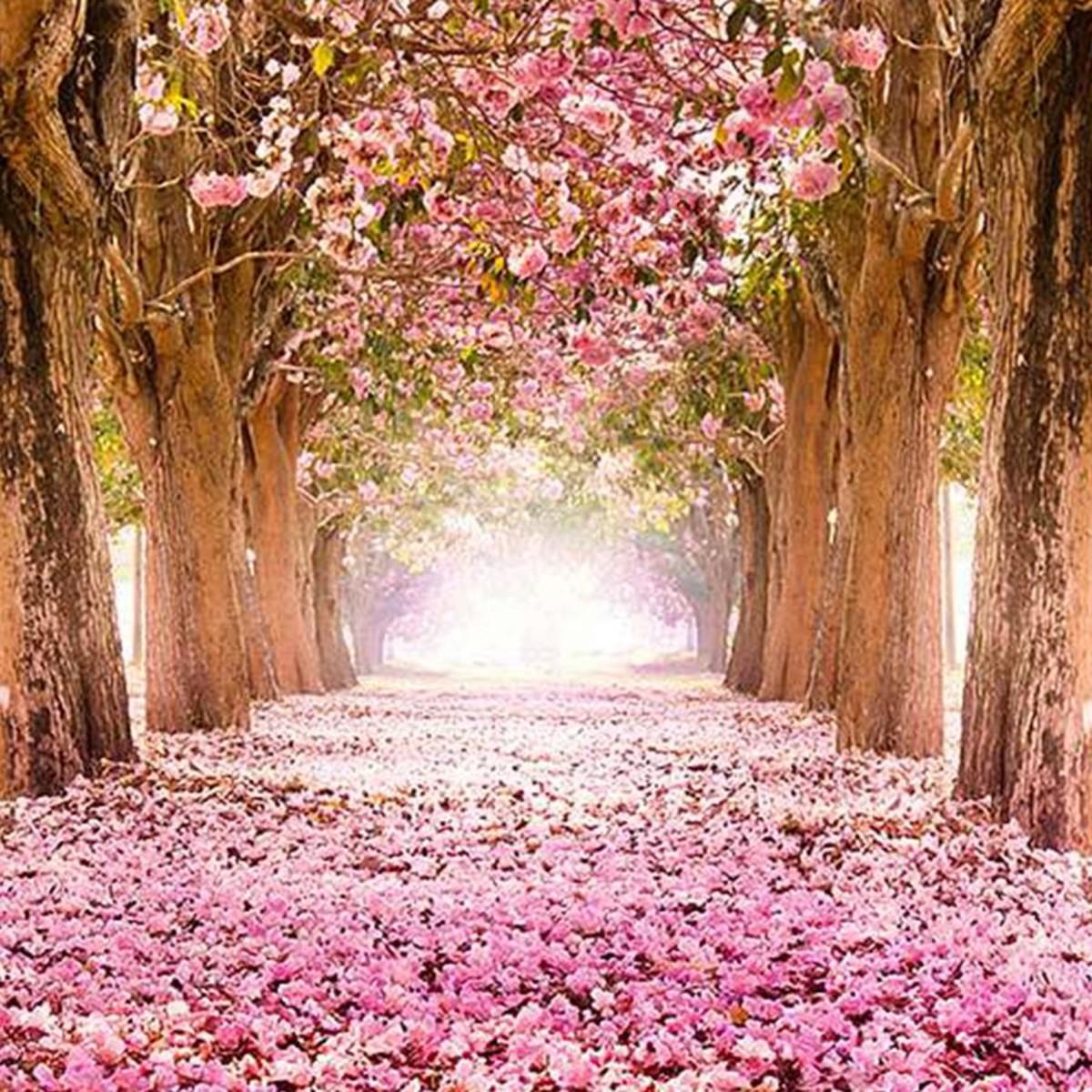 Фотообои Divino Decor Цветущие деревья C-249 200х270 см