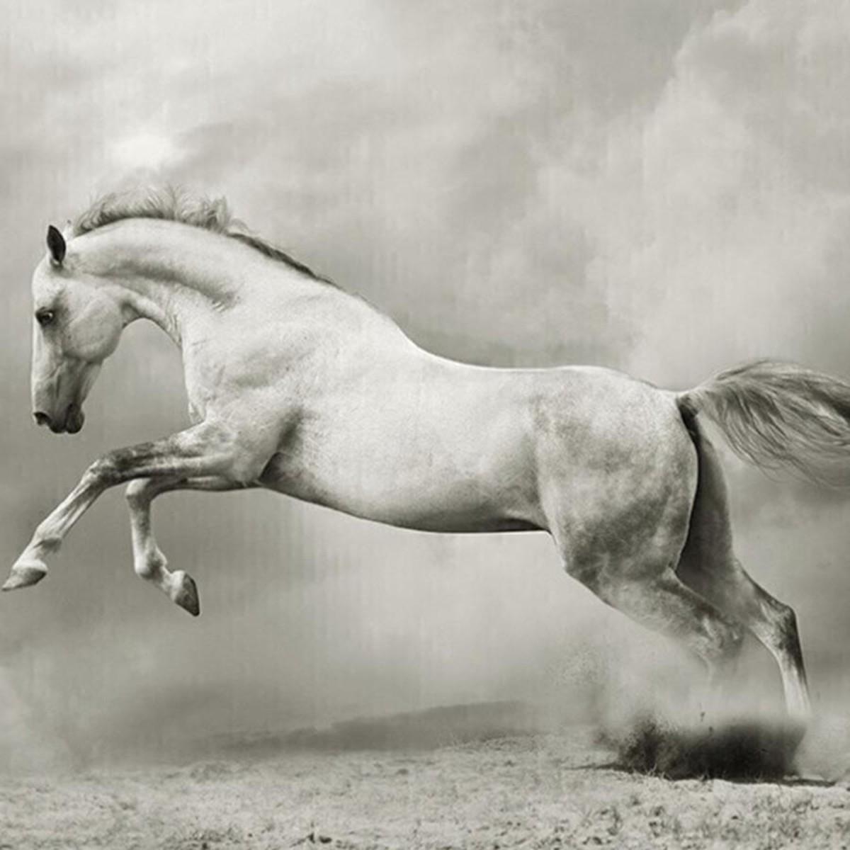 Фотообои Divino Decor Белый конь A-060 200х147 см