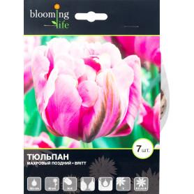Тюльпан «Брит», 12 см