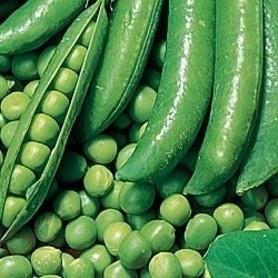 Семена Горох «Динга»