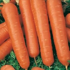 Семена Морковь «Тушон»