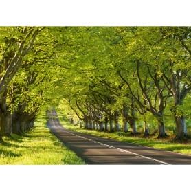 Фотообои бумажные «Чувство весны» 254х184 см