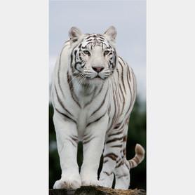 Фотообои флизелиновые «Тигр» 100х200 cм