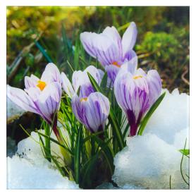 Картина на стекле 30х30 см «Цветы крокусы»