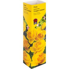 Роза «Плетистая» эконом, в ассортименте