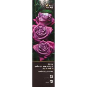 Роза чайно-гибридная «Блю Лейк» в тубе