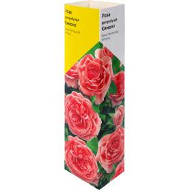 Роза флорибунда «Кимоно» в тубе