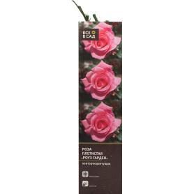 Роза плетистая «Роуз Гарден» в тубе