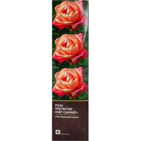 Роза плетистая «Уайт Санрайз» в тубе
