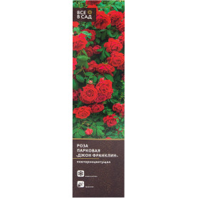 Роза парковая «Джон Франклин» в тубе