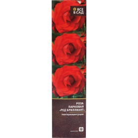 Роза парковая «Ред Бриллиант» в тубе
