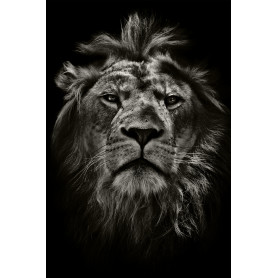 Картина на стекле «Мудрый лев» 40х60 см