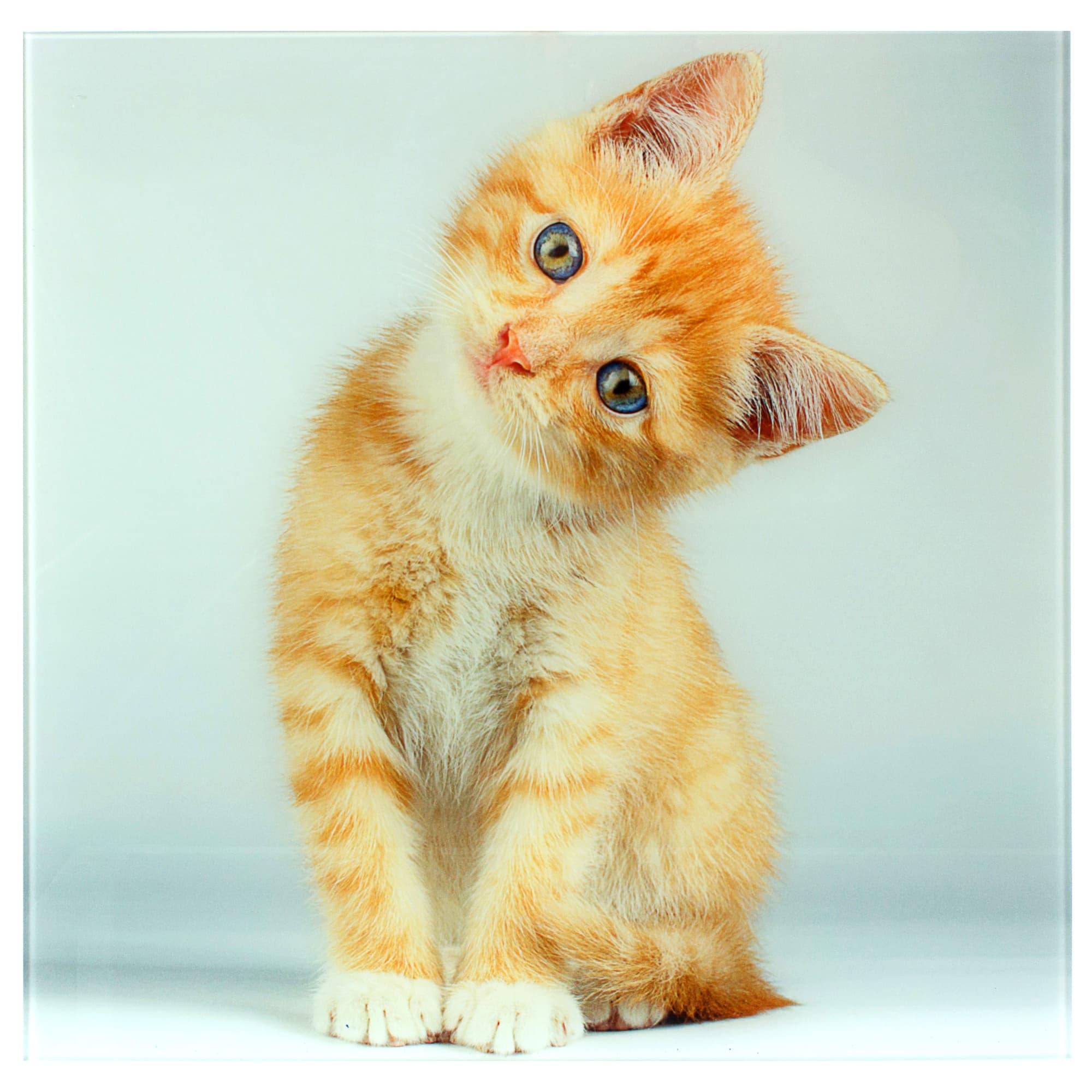 Открытки рыжими котятами